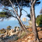 Iles de Lerins, en face de Cannes